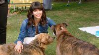 Dog Days - Herz, Hund, Happy End! (DVD)